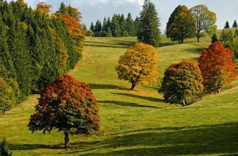 怎样做好树木的养护管理工作?林木养护管理技术要点