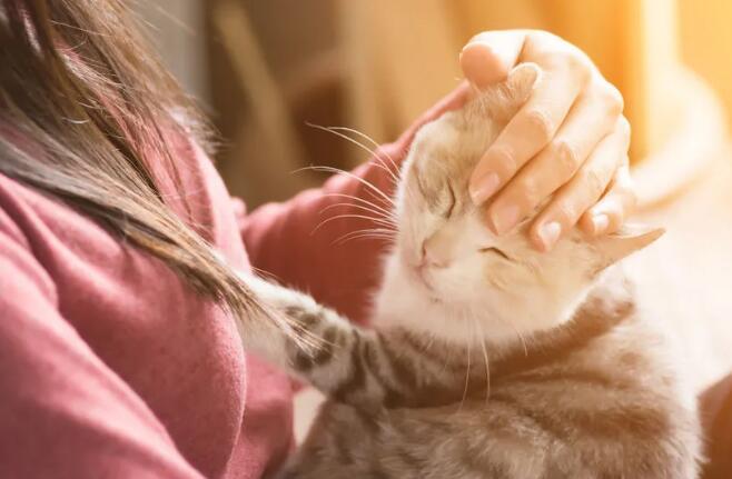 貓身上的花紋是怎么來的?或由胚胎基因表達差異決定