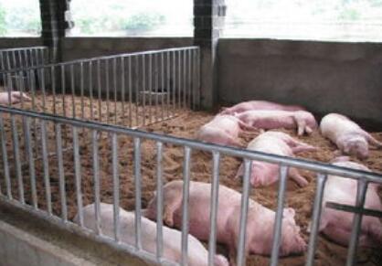 猪企陷入两难境地:保业绩压栏,还是保出栏亏钱?