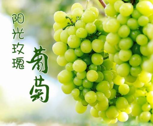 """""""葡萄中的爱马仕""""阳光玫瑰葡萄价格跌幅惊人,未来发展前景怎么样"""