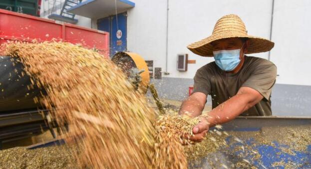 粮食战争简史,粮食的逻辑分析