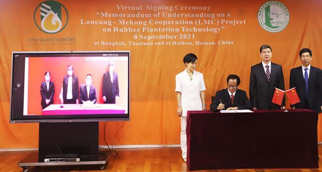 中国热科院橡胶所与泰国橡胶局开展橡胶种植技术合作