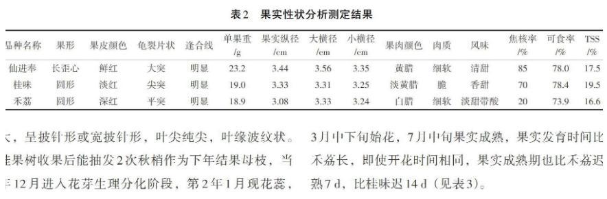 广西桂平市引种试种的荔枝新品种仙进奉(原产地广东)