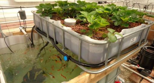 家庭景观式鱼菜共生的装置系统设计技术要点
