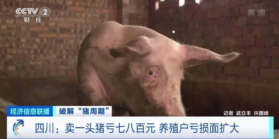 现在养一头猪能赚多少钱?去年赚2000元/头,今年亏800元/头