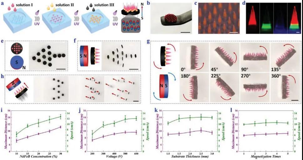 口腔磁响应微针机器人组成、工作原理及血糖调节能力