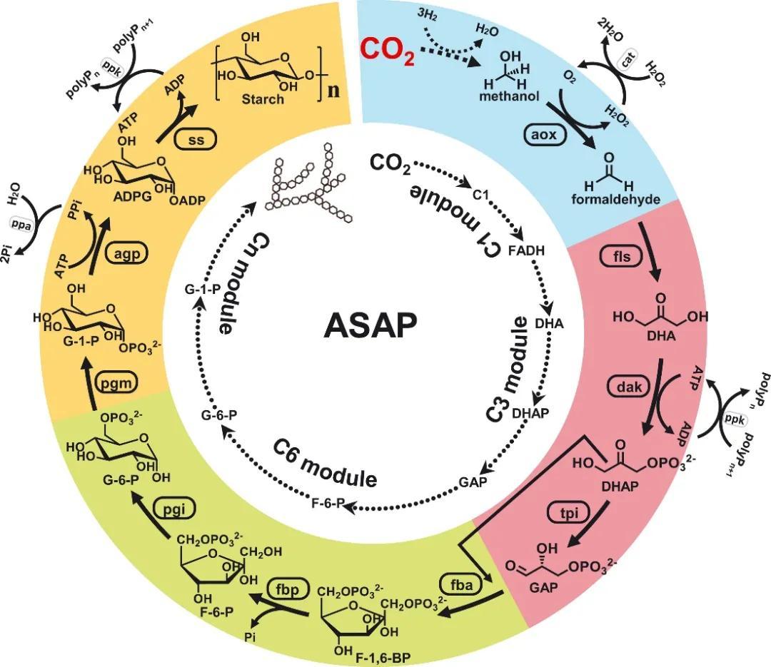 ?Science重磅:首次實現從二氧化碳到淀粉分子的全合成