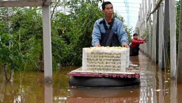 洪涝下的山西现状:十多万亩农田被浸泡,村民蹚水看庄稼地