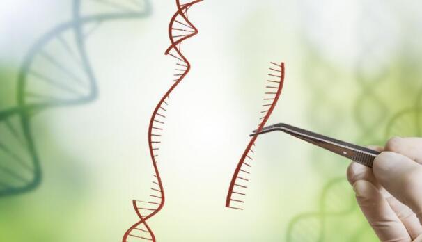 基因编辑迎来新突破:基因长度有望扩展一百倍