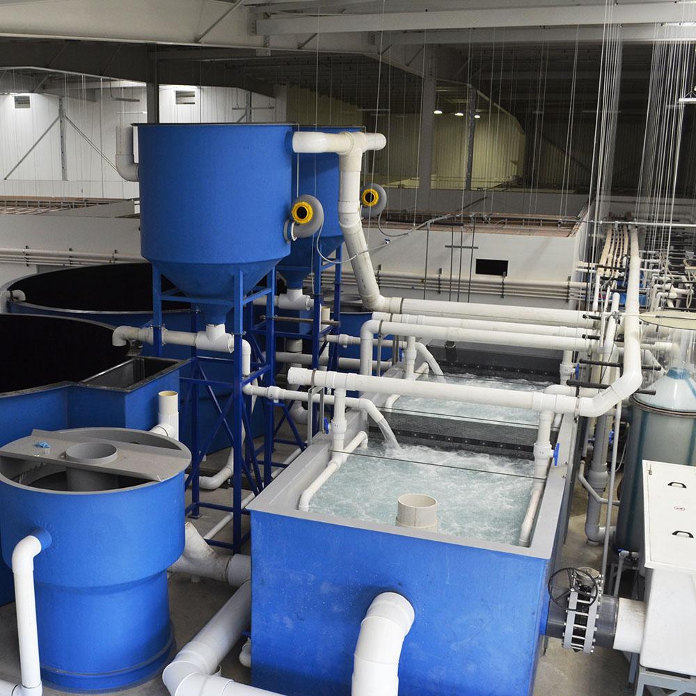 循环水养殖设备厂家丨循环水处理系统丨循环水养鱼