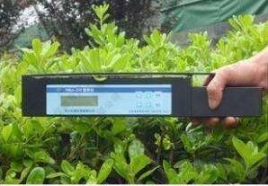 手持叶面积仪在芭蕉叶等大叶片检测中的实用性能