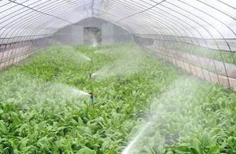 详解蔬菜高效灌溉技术