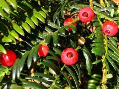 世纪星在植物萃取设备中的应用方案