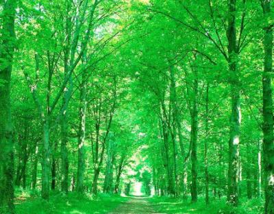 林业技术与病虫害防治方案探讨