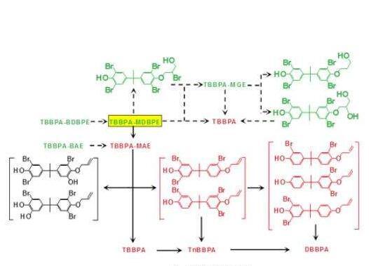 科学家在四溴双酚A类溴代阻燃剂研究方面取得进展