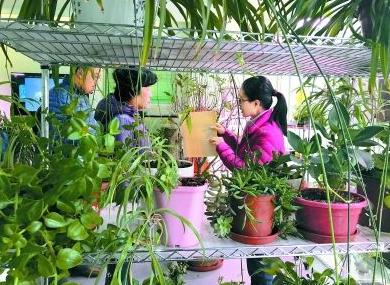 """北京引进""""植物诊所""""运行模式"""