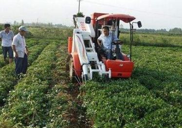 正阳县小花生全程机械化 撑出循环大产业
