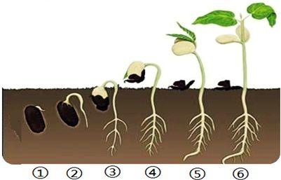 种子的萌发条件