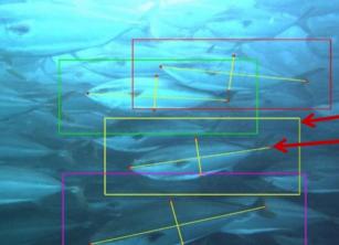 NEC携Nissui共同开发以鰤鱼为对象养殖业务高效化解决方案