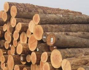 2020年我国木材需求量获将达8亿立方米 缺口将达2亿立方!