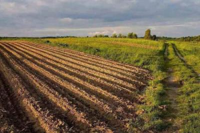 农业农村部:耕地轮作休耕试点面积增加到3000万亩