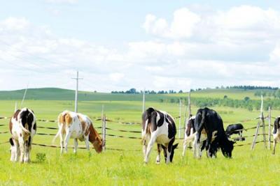 宁夏构建畜牧业发展新格局