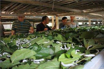 南充促进中巴交流合作 先进蚕桑生产技术与机械推广到古巴