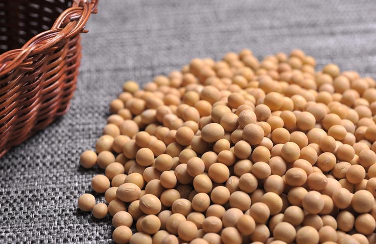 中美贸易战:中国限制美国大豆进口, 美国将适得其反 中国坚决回