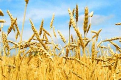三大粮食作物制种纳入农业保险保险费补贴目录
