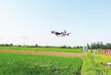 荆州30余架植保无人机田间竞秀绝技