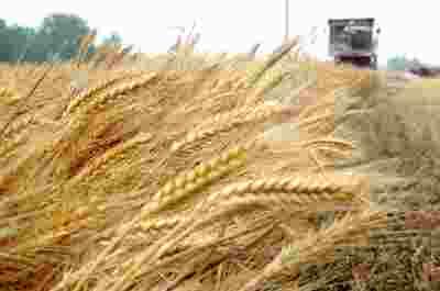 限制主粮进口规模,国内市场受影响甚微