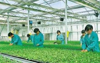 """""""农业工厂""""成农业产业化新风向"""