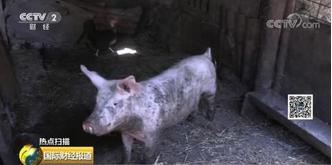 猪瘟疫情持续蔓延!经济损失或达数亿欧元
