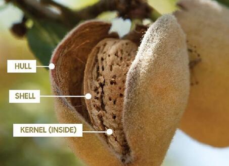 研究表明添加杏仁壳能够有效增强塑料制品的强度
