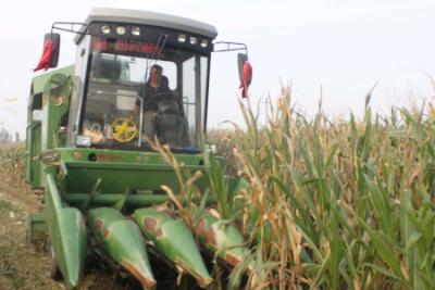 玉米收获机市场即将进入旺销模式