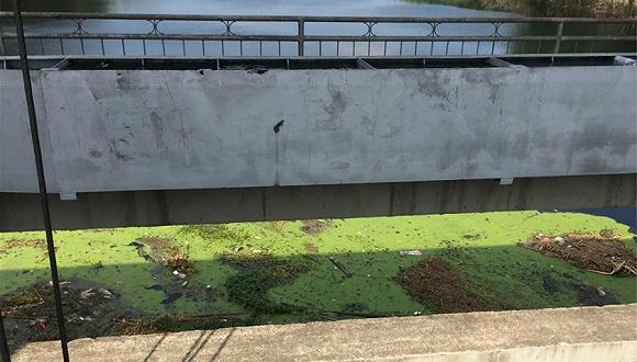 新华社调查洪泽湖鱼蟹死亡事件:环保合作协议成一纸空文,洪水走廊沦为污水走廊