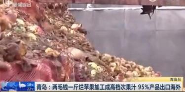"""曝光!青岛工厂腐烂苹果加工果汁,声称""""出口""""就代表""""好"""""""