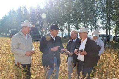 """我国再顺利培育出一个高产大豆品种""""圣豆5号"""""""