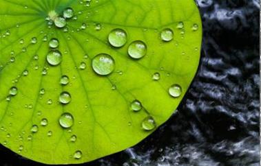 """科学家发明纳米防水涂料,像荷叶表面一样""""滴水不沾"""""""