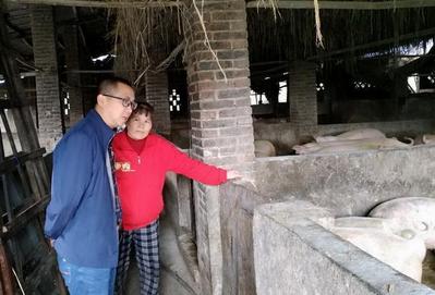 一天确诊三起非洲猪瘟疫情 湖北已强制关闭近千家猪场