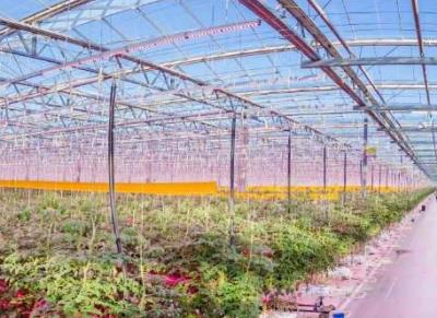 日亚与荷兰Qwestland开展研究和实验,开拓LED园艺照明市场