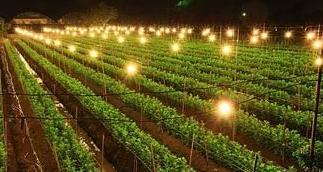 欧司朗:以创新科技主力,打造智慧植物照明系统