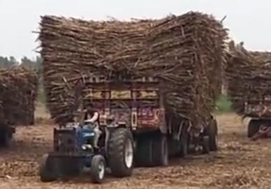 拖拉机运输甘蔗