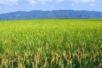 三聚环保加码生态农业 服务国家乡村振兴