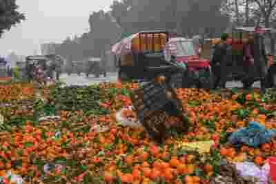 广西柑橘2毛5仍滞销:市场上供大于求,全国各地都在种蜜橘