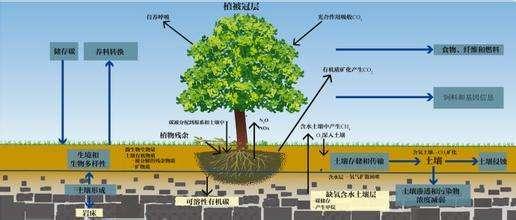 8个步骤增加增加土壤有机质含量和碳封存