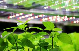 意大利建立起首个功能性垂直培育农场:利用LED照明实现高产量短周期