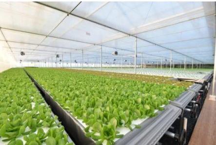 京东自建植物工厂是怎么回事?京东自建植物工厂的目的