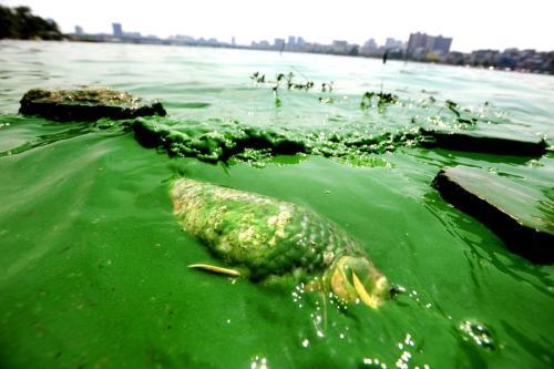 """千岛湖首个蓝藻水华预警""""神器""""投用 进入高频自动监测时代"""