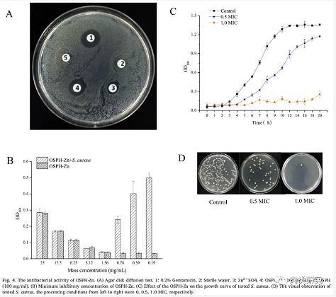 锌-肽螯合物的抗菌机理研究